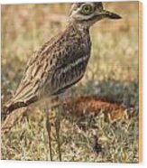 Indian Stone-curlew Or Indian Thick-knee Wood Print