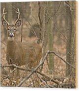 Indiana Buck  Wood Print