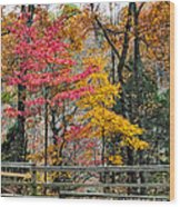 Indiana Fall Color Wood Print by Alan Toepfer