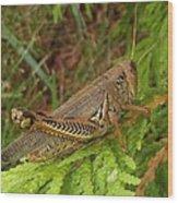 Indiana Grasshopper Wood Print