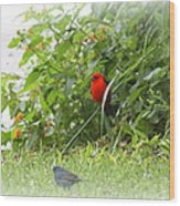Indigo Bunting And Scarlet Tanager 2 Wood Print