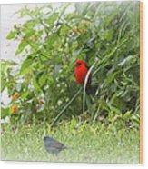 Indigo Bunting And Scarlet Tanager 2 Wood Print