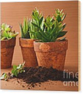 Indoor Plant Wood Print by Boon Mee