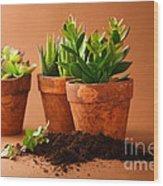 Indoor Plant Wood Print