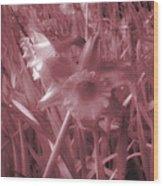 Infra-red Daffodils Roath Park Cardiff Wood Print