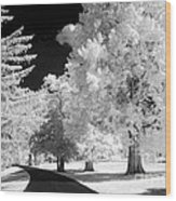 Infrared Delight Wood Print