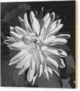 Infrared - Flower 03 Wood Print