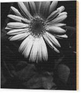 Infrared - Flower 05 Wood Print