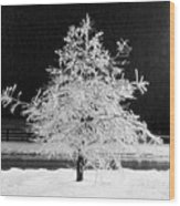 Infrared Ice Tree Wood Print