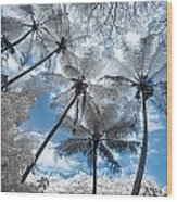 Infrared Palm Trees On The Coast Wood Print