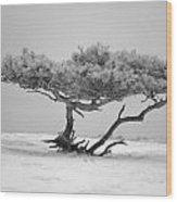 Infrared Photo Of Pine In Winter Landscape In The Nature Dwingelderveld In The Netherlands Wood Print by Ronald Jansen