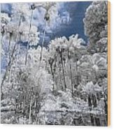 Infrared Pond And Reflections 2 Wood Print