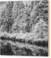Infrared Trees Wood Print