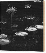 Infrared - Water Lily And Lily Pads Wood Print
