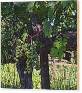 Inglenook Vineyard -11 Wood Print