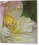 Inner Beauty Of The Lotus Wood Print