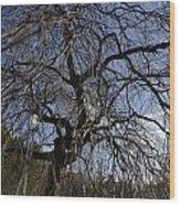Inner Energy In Full Blossom 1 Wood Print