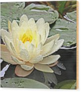 Inner Glow - White Water Lily Wood Print