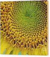 Inner Peace Forms Within This Sweet Yellow Sunflower Wood Print
