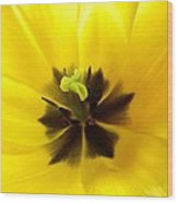 Inner Tulip Macro Wood Print
