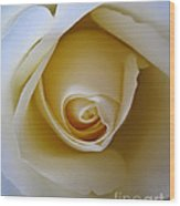 Innocence White Rose 5 Wood Print
