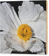 Innocent Krinkle - White Peony By Diana Sainz Wood Print