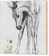 Inquisitive Epona  Wood Print