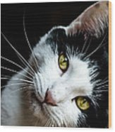 Inquisitive Kitty Wood Print