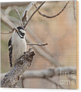 Inquisitive Woodpecker Wood Print