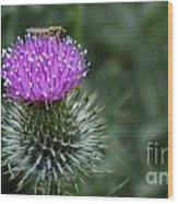 Insect On A Thistle Wood Print