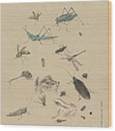Insects C1825 Wood Print
