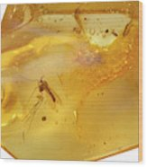 Insects In Fossil Amber Wood Print