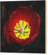 Inside A Tulip Wood Print