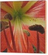 Inside Amaryllis Wood Print