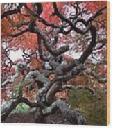 Inside The Japanese Maple Wood Print