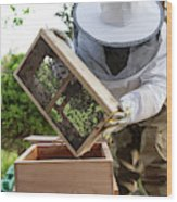 Installing Bees In A Hive Wood Print