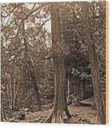Interesting Tree Wood Print