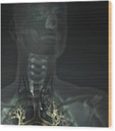 Internal Lung Anatomy Wood Print