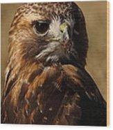 Red Tailed Hawk Portrait Wood Print