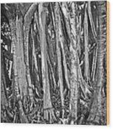 Into The Spirit Tree Wood Print