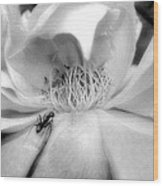 Intrigue Rose In Black And White Wood Print