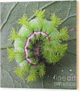 Io Caterpillar Wood Print