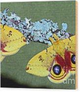 Io Moth Automeris Io Adult Males Wood Print