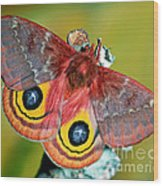 Io Moth Wood Print