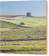 Iowa Farm Land #1 Wood Print