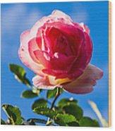 iPhone Case - Pink Rose Wood Print