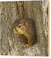 iPhone Squirrel In A Hole Wood Print