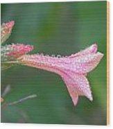Ipomopsis Rubra Wood Print