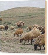 Iran Sheep Wood Print