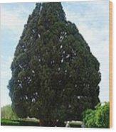 Iran Yazd Cedar Tree Wood Print